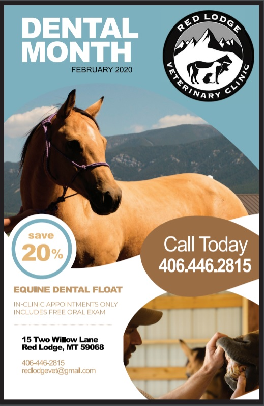 Equine Dental 2020